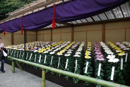 Shinjuku Gyoen (新宿御苑) Chrysanthemum-Exhibition (菊エクスヒビション)