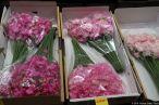 Ōta Flower Market (大田市場の「花市場」)